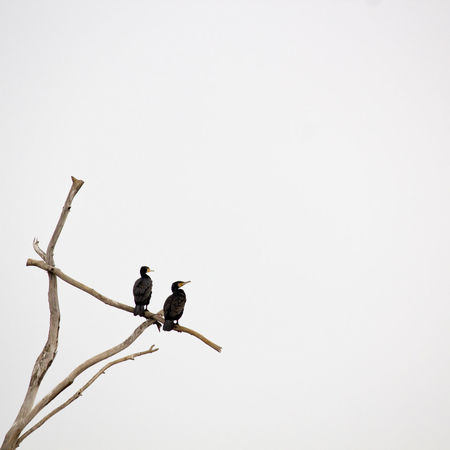 Two Is Better Than One Animals In The Wild Bird Animal Themes Clear Sky Nature Beauty In Nature Photooftheday EyeEm Week EyeEm Best Shots EyeEm Eyeem4photography EyeEm The Best Shots Popular Photos Photographer Eyeemphotography EyeEm Team Nature Mininmal Minimalmood