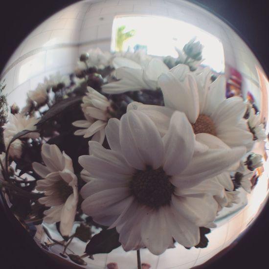 Flower Plant No People Day Fisheye Fisheyelens