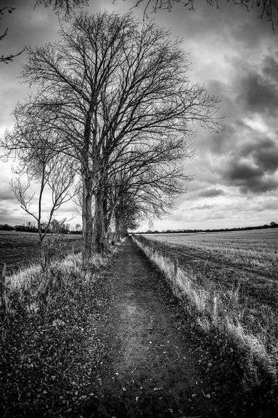 Bare Tree Landscape Nature Tranquility Field Tranquil Scene Tree The Way Forward Day Outdoors Sky Scenics Grass Beauty In Nature No People Road Lone
