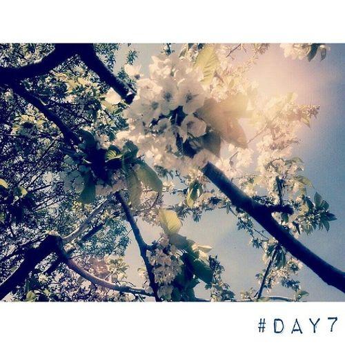 Sprig tree. 100happydays Day7 Sprig Tree flowers flower flowerpower nature sunlight picoftheday igersItalia igersAbruzzo