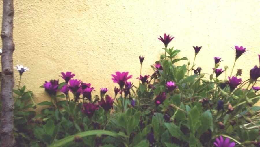flowers 🌸🍀
