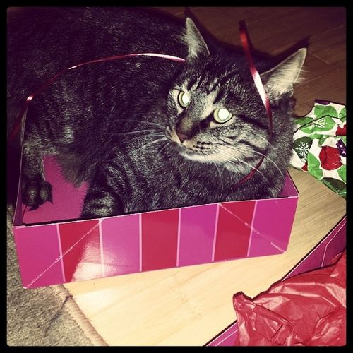 I just love her so much. Vladimir Presentboxes Christmas CatLadyForlife catmom mylove catsofinstagram