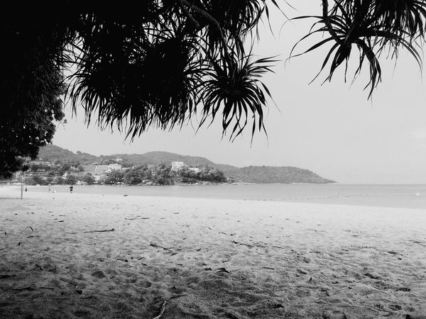 Memories Beauty In Nature Beach Scenics Tree Sea Sand Nature Outdoors Wildlife & Nature Black & White Lifestyles Inspired Enjoy Little Things Sweet♡