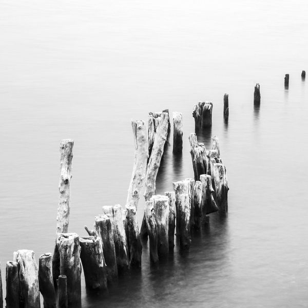 Wooden Post Water In A Row Wood - Material Tranquility Pole Waterfront Lake Tranquil Scene Sea Wooden Non-urban Scene Groyne Nature Scenics Breakwater Calm Group Of Objects Hidden Gems  EyeEm Gallery EyeEm Best Shots Beauty In Nature