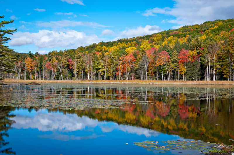 Fall Colors Fall Foliage Mirror Image Autumn Beauty In Nature Change Cloud - Sky Day Lake Mountain Nature No People Outdoors Reflection Scenics Sky Standing Water Tranquil Scene Tranquility Tree Vibrant Color Water Waterfront