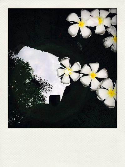 Travel Thailand Adventure First Eyeem Photo
