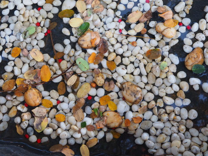Beautiful Pebbles In Nature Brown Pebbles Multi Color Of Pebbles Multi Colored Nature Pebbles Pebbles In Water Small White Pebbles