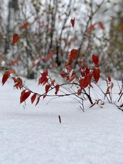 Веточка Winter
