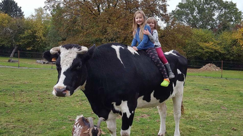 Animal Family Animal Love Animal Photography Animal Animal Themes Cow Cows🐮 Cow Domestic Animals Domestic Cows Outdoor Animals