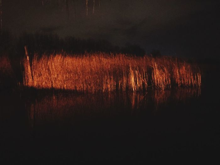 Orange Color No People Nature Night Illuminated Sunset Outdoors Sky Wet Plant Beauty In Nature Reflection Glowing Growth Tranquility Close-up Water Environment