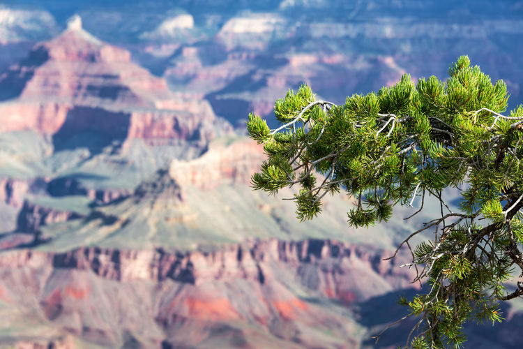 Close-Up Of Plants Against Rock Formation In Background At Grand Canyon National Park