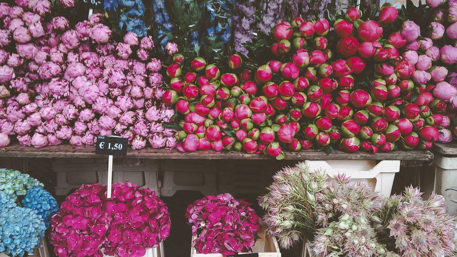 Pink flowering plants at market stall