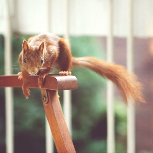 Wildlife squirrel Relaxing animal Cute