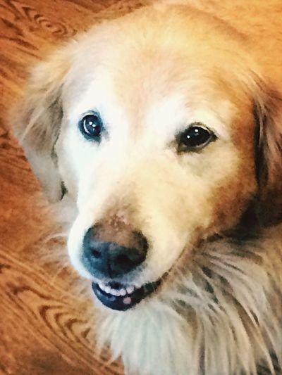 Dogslife Buster