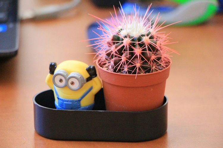 Funny Officeplants Cactus Minions Minion  Funnythings EyeEm Nature Lover