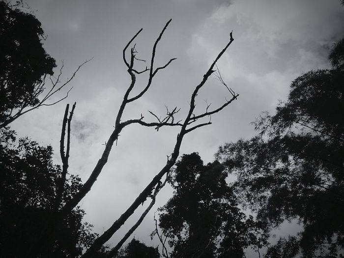 Dark Sky EyeEm