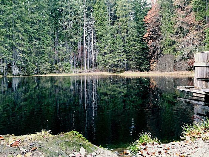 Lake Forest Nature Boubínský Prales