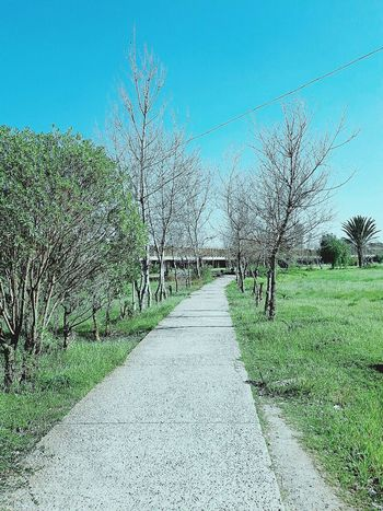 Usthb EyeEmNewHere Trees Pathway The Way Forward Clear Sky No People Grass Green Color Day Outdoors Sky