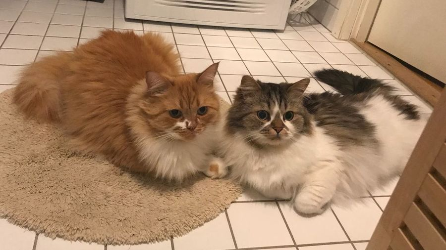 High angle view of cats on floor at home