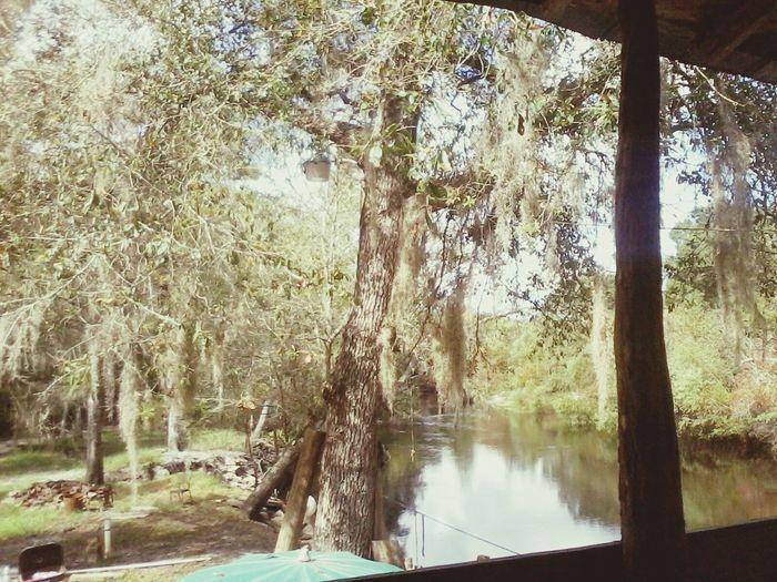 our river house on the Satilla :D Georgia Satillariver Prettyview Nature