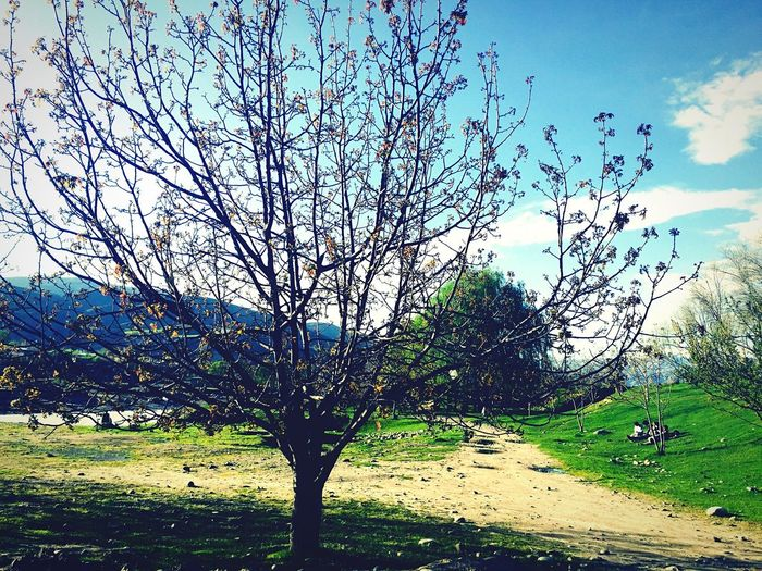 Spring Has Arrived Yay Afghanistan North Beauty Beautiful Nature Beautiful Day Okthanxbye