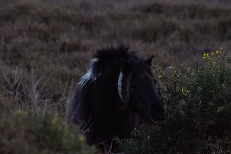Adventurelands Photography Eating Explorers Connect New Forest National Park New Forest Pony New Forest Wild Pony Animal Themes Beauty In Nature Close-up Day Field Grass Mammal Nature No People One Animal Outdoors Tranquil Scene