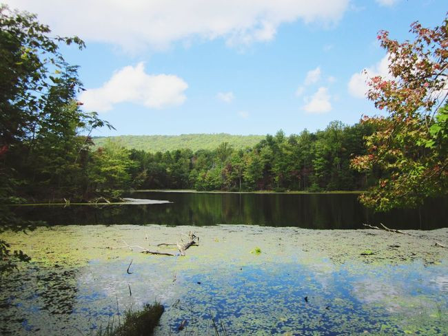 Nature 🍃 Tn Baysmountain Lake Tree Nature No People Outdoors Water Day Sky Beauty In Nature Plant EyeEmNewHere