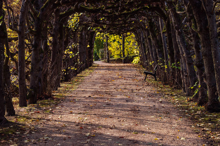 footpath amidst trees in forest Beauty In Nature Day Diminishing Perspective Direction Footpath Forest Growth Land Nature No People Non-urban Scene Nusshain 10 18 Oktober Outdoors Plant The Way Forward Tranquil Scene Tranquility Tree Tree Canopy  Tree Trunk Treelined Trunk WoodLand