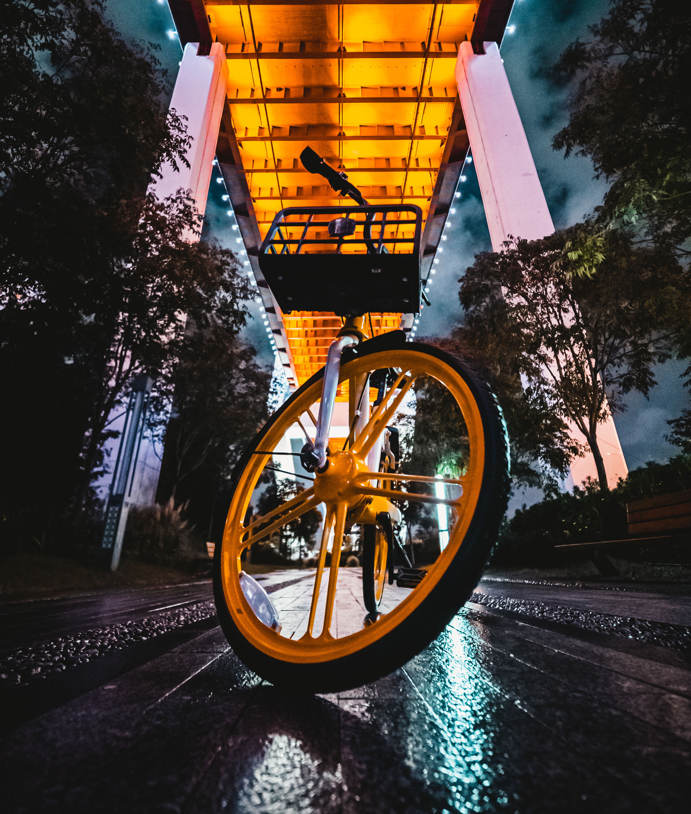 transportation, tree, architecture, nature, no people, plant, sky, mode of transportation, water, built structure, bicycle, outdoors, reflection, city, land vehicle, building exterior, wheel, road, cloud - sky, tire