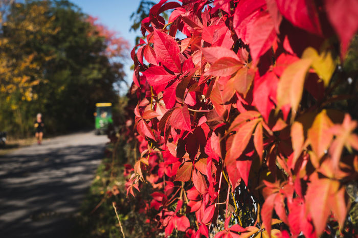 Fall foliage - Sherbrooke QC Fall foliage along a path in Parc Jacques-Cartier, Sherbrooke QC. 2017 Autumn Autumn Colors Autumn Leaves FUJIFILM X-T2 Olney Quebec Red Automne Canada Close-up Fall Foliage Nature Outdoors Rouge Sherbrooke