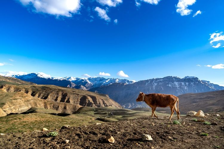 Horses on mountain against blue sky