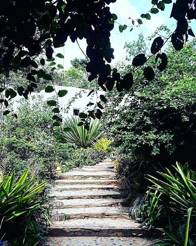 EyeEmNewHere Growth Day Nature Outdoors Plant Tree No People Sky Grass Nature Tranquility Calm Calming Nature Photography Beauty In Nature Calmness Naturelovers Nature_collection Stairs_steps Stairs In Nature Steps Stepsoffaith Landscape Colors Be. Ready.