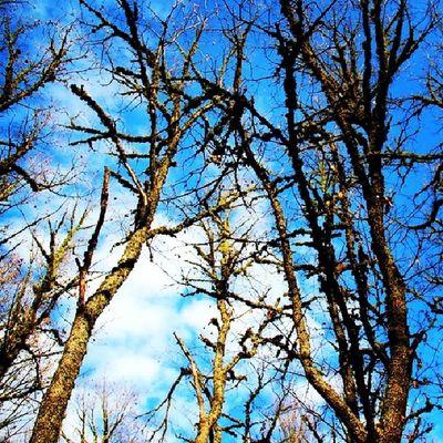 Doğa Dogal Arşiv Bulut gökyüzü