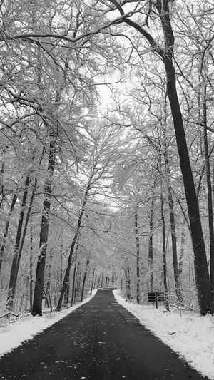 Road amidst bare trees in winter