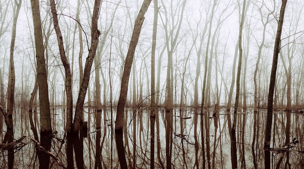 Tranquil Scene Tranquility Solitude Branches Trees Vertical Water Water Reflections Foggy Foggy Morning Tree Bare Tree Cold Temperature Backgrounds Full Frame Branch Tree Trunk Foggy Calm