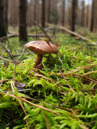 Beauty In Nature Close-up Day Fly Agaric Forest Fragility Freshness Fungus Grass Growth Mushroom Nature No People Outdoors Toadstool Tranquility