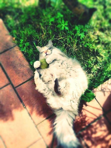 Cat Animal Aww Smile