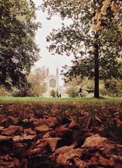 Man on autumn trees against sky
