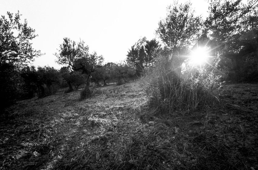 idmphotographer.com Beauty In Nature Blackandwhite Day Film Photography Filmisnotdead Growth Harsh Light High Contrast Bnw Ilford Pan F50 Italy Landscape Natural Light Nature No People Outdoors Plant Rural Rural Scene Sky Sun Sunstar Tranquil Scene Tranquility Tree Wide Angle