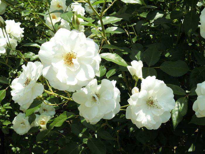 はな 花 はな 植物 白