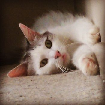 My Precious Catsofinsta Catobessed Cat Catlady Crazycatlady Catsofinstagram Catsrule Dailycatpics Beautiful Precious Catsmakemehappy Catstagram