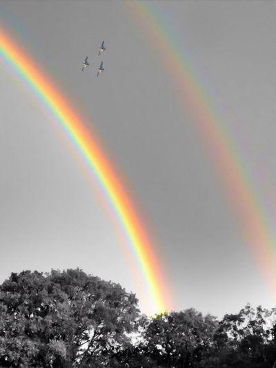Rainbowr the