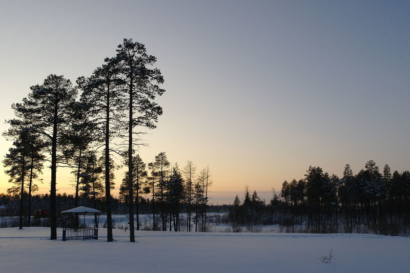 Siberian winter forest before sunset Beauty In Nature Cold Temperature Nature Scenics - Nature Sky Snow Sunset Tranquil Scene Tranquility Tree Winter