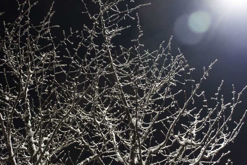 Night Sky No People Nature Plant Tree Branch Bare Tree Cold Temperature Low Angle View Beauty In Nature Tranquility Winter Outdoors Frozen Lens Flare Complexity