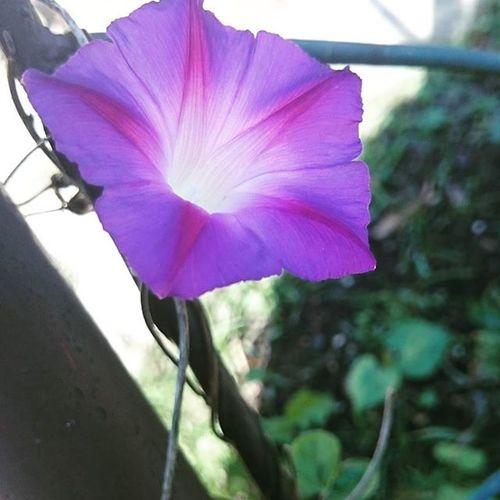 Nature Flower Beautiful Garden purple
