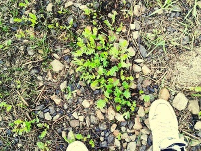 :)перваязелень