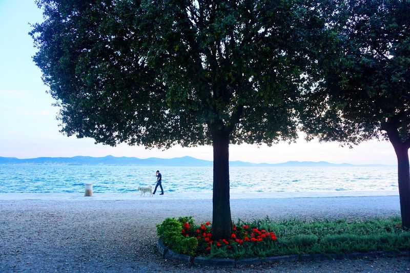 Trees on shore