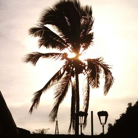 Algo tan simple, puede llegar a hacer hermoso Moments Nature Soaking Up The Sun Palm Trees Cali