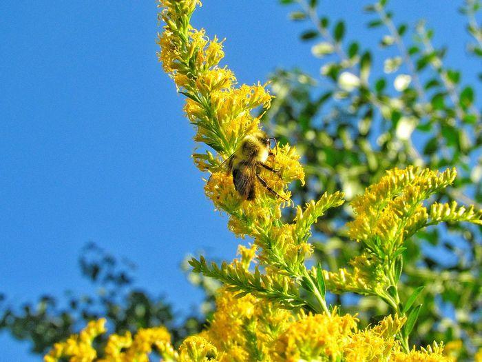 hungry bee Bee