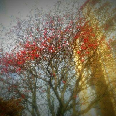 Ic_trees Rsa_trees Royalsnappingartists DroidEdit frameable quite_interesting fingerprintofgod mostdeserving art_feeling igersgothenburg fineartstorage majorna Gothenburg Sweden youmobile galaxys2 ig_captures ig_masterpiece treescollection treeworld